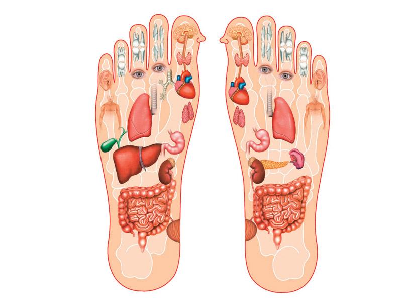 600 din. umesto redovne cene od 1200 din. -- Refleksologija i masaža stopala u trajanju od 30 minuta u Kozmetičkom salonu Almamons Stevana Mokranjca 31, Novi Sad!  Refleksologijastopalaje drevna metoda masažestopala, koja se zasniva na saznanju da svaki deo tela ima svoju projekciju na povrscaronini kože odnosno polja koja su određenim refleksnim mehanizmima povezana s odgovarajućim organima.Refleksna masaža stopalaje grana kineskemedicinekoja se već hiljadama godina uspescaronno primenjuje ne samo u lečenju već i u dijagnostici i prevenciji raznih oboljenja. U Kini i Scaronri Lanki, lečenje zasniva na principu energetskog funkcioniranja tela koje je usko povezano s energijom prirode i kosmosa, čiji je čovek sastavni deo. Vitalna energija ndash či ndash osnovni je pokretač svih procesa u telu i oko njega, a ima dva različita aspekta (jin amp jang) ndash suprotnosti koje funkcioniscaronu zajedno uspostavljajući ravnotežu. Refleksologijom, odnosno, terapijom zona leče se:nesanica,dijabetes, hipoglikemijaali se i reguliscaronekrvni pritisak. Ova metoda se koristi i za opuscarontanje, poboljscaronanje koncetracije i energije tela, pa se naročito preporučuje đacima i studentima.Opscaronte stanje organizma vrlo brzo se poboljscaronava, jer sama masaža podstiče bolju cirkulaciju i protok kiseonika u krvi, zatim stimuliscarone stvaranje limfe koja reguliscarone izbacivanje scarontetnih materija iz organizma i utiče na stvaranje ćelija imunoloscaronkog sistema. Masažu radi profesionalni maser i refleksolog sa iskustvom u ugodnom ambijentu salona koji ima sve potrebne uslove za kvalitetnu i uspescaronnu masažu! Kozmetički salon